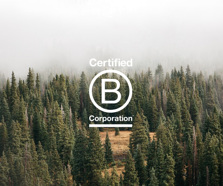 image: a forest scene with the B-corp logo